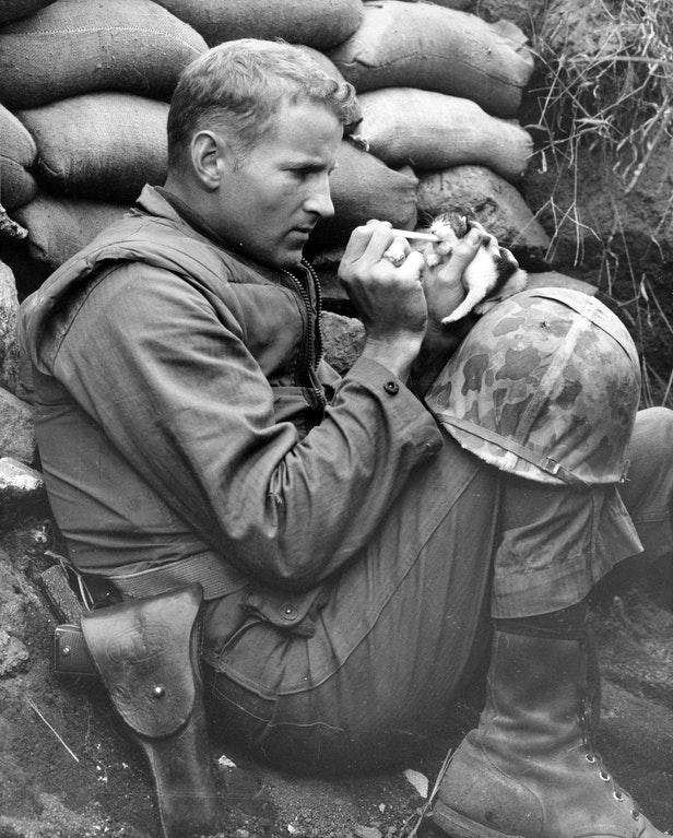 子猫にえさを与える兵士